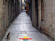 A cat in Dubrovnik